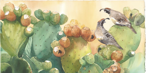 View Watercolor Gallery